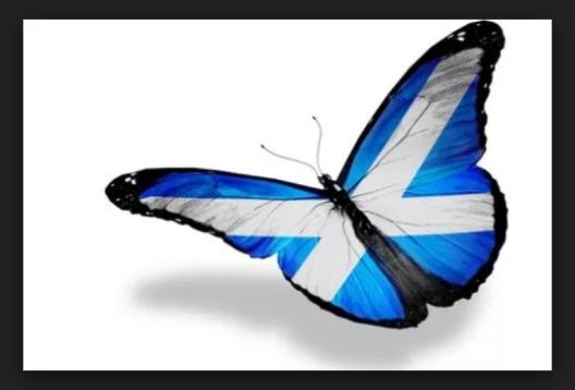 butterfly scots
