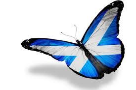 butterfly-revolution